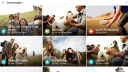 Android, App, Google Photos, Google Fotos, Google Foto