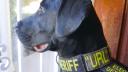 Polizei, URL, Hund