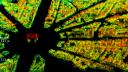 Wissenschaft, Radar, Erdbeobachtung, TerraSAR-X