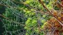 Botnetz, Netz, Herbst, Spinne