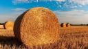 Landwirtschaft, Feld, Stroh, Acker
