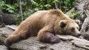 Tier, Bär, Faul, Faulheit, Langeweile