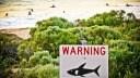 Australien, Strand, Schild, Haiwarnung