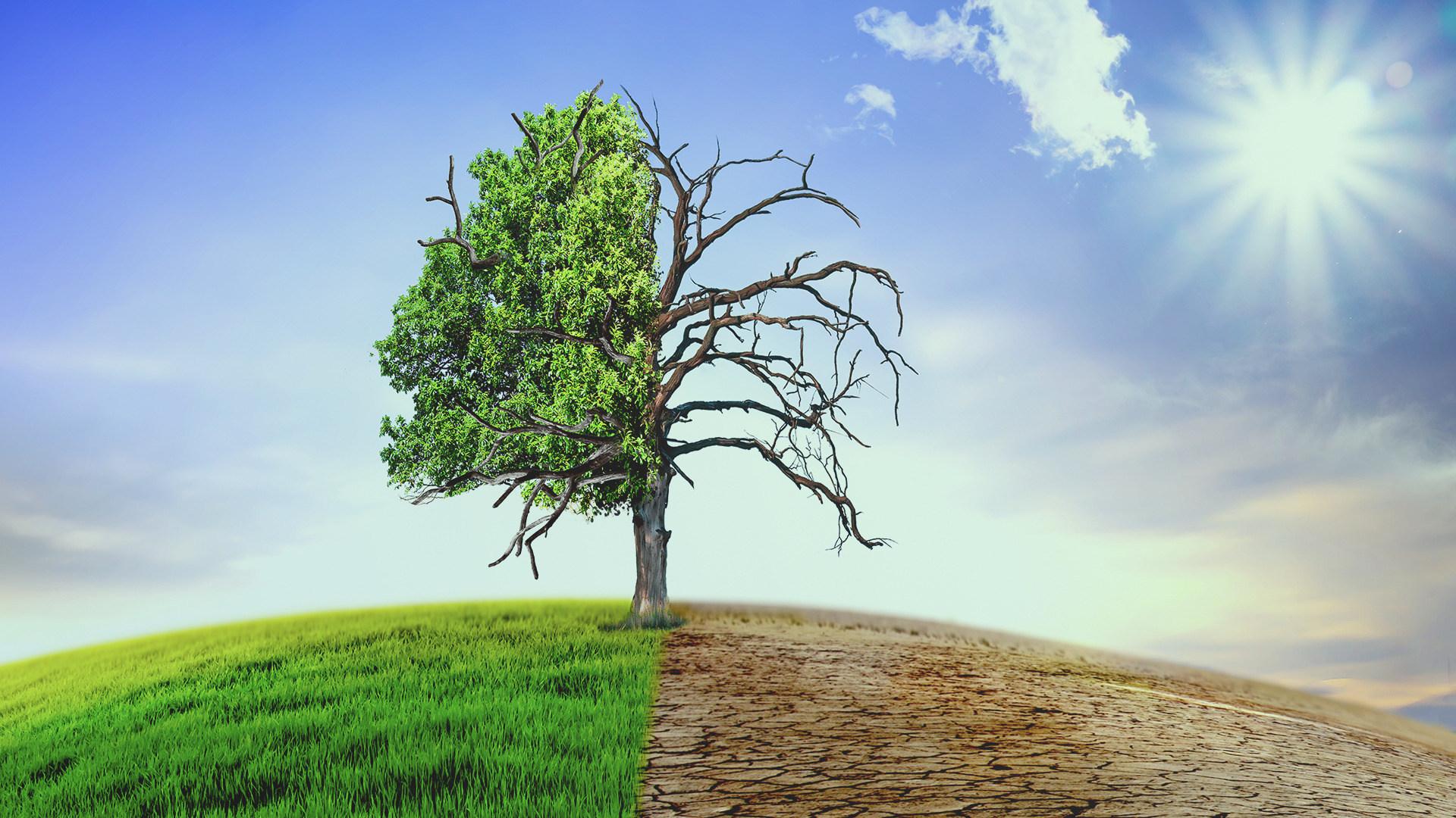 Energie, Umwelt, Erde, Klima, Planet, Umweltschutz, ökostrom, Klimaschutz, Fabrik, Welt, Klimawandel, Globus, Erderwärmung, Klimaerwärmung, Klimapolitik, Erwärmung, Climate, Umweltfreundlich, Temperatur, Greenpeace, Ozean, Weltklimagipfel, Pflanze, Regenwald, Urwald, Wald, Himmel, Verantwortung, Baum, Nordpol, Sommer, Wüste, Bäume, Katastrophen, Katastrophe, Jahreszeiten, Toter Baum