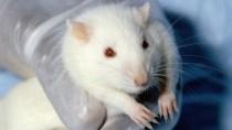 Handystrahlung verursacht vielleicht keinen Krebs, aber beschleunigt
