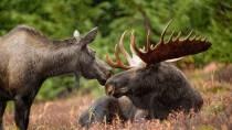 Moose-Wurm betreibt Social Networking von eurem Router aus