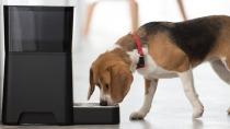 WLAN-F�tterungsmaschine lie� Haustiere nach Server-Ausfall hungern