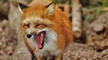 """Firefox: Mozilla löst endlich ein sieben Jahre altes """"mailto:""""-Problem"""