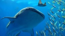 Neues Protokoll erm�glicht Drahtlos-Internet im Meer