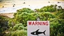 Kurios: Austr. Haie warnen vor sich selbst per Tweet
