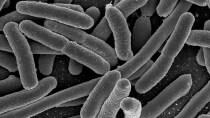 Neuartiges Leben: Erweiterte, programmierbare DNA in lebenden E. coli