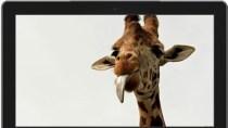 Gratis: Neue Windows-Themes von Welle bis Wildtier