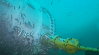 Microsofts Unterwasser-Rechenzentrum jetzt via Webcam zu beobachten