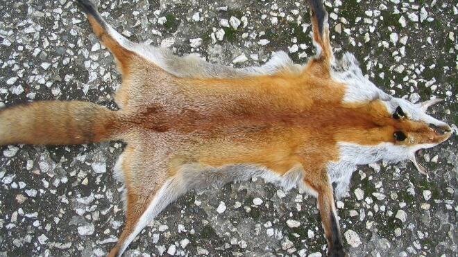 Firefox, Fuchs, Fell