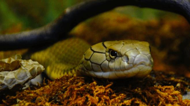 Tier, Schlange, Giftschlange
