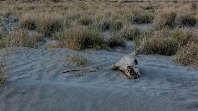 Tod, Wüste, Dürre