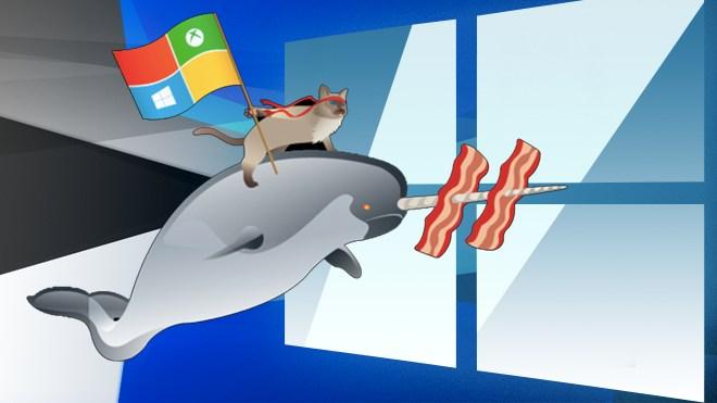 Microsoft, Windows 10, Beta, Windows Insider, Insider Preview, Windows 10 Insider Preview, Insider, Windows 10 Preview, Windows Insider Program, Windows Insider Preview, Wahl, katze, CAT, I am a Windows Insider, Speck, Ham