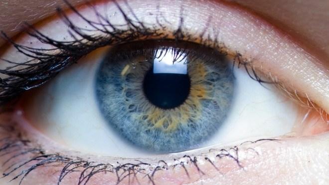 Auge, Mensch, Iris